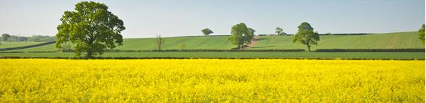 corn_fields